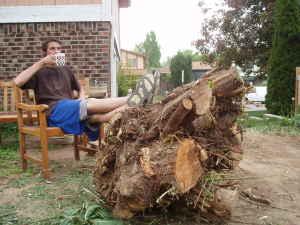 tree-stump-for-sale