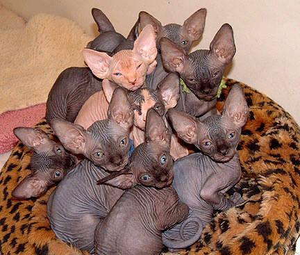 en-kittens