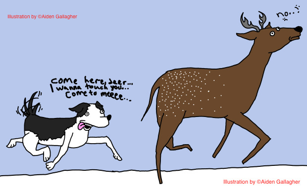 dog-chasing-deer1